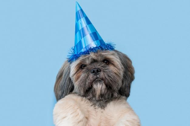 Забавная милая собака, вид спереди