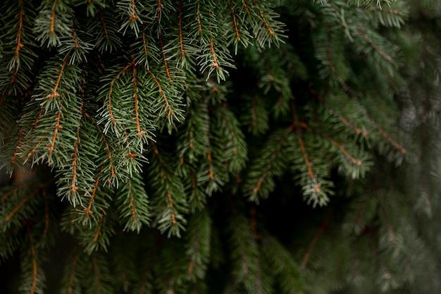 Вид спереди зеленой сосны