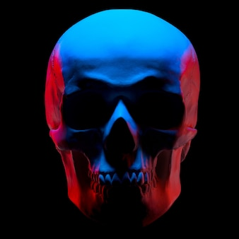 인간 두개골의 석고 모델의 전면보기