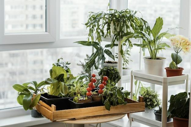 냄비에 실내 식물의 전면보기