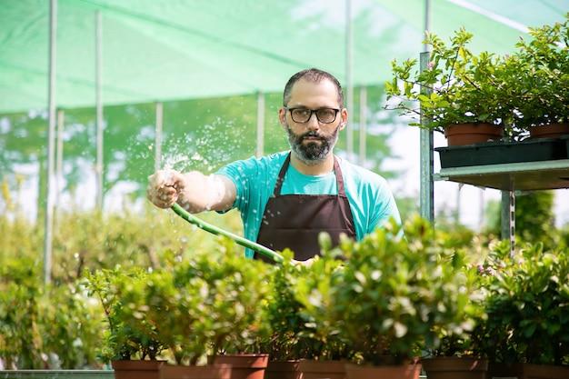 호스에서 남자 물을 냄비 식물의 전면 모습. 온실에서 일하고 꽃을 재배하는 앞치마와 안경에 집중된 중년 정원사. 상업 원예 활동 및 여름 개념