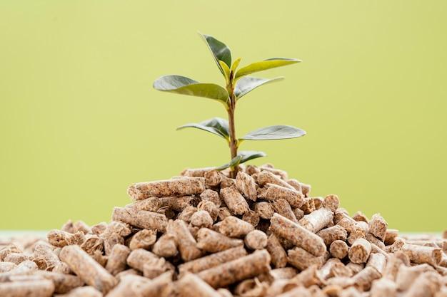 Вид спереди выращивания растений из пеллет