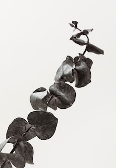葉を持つ植物の正面図
