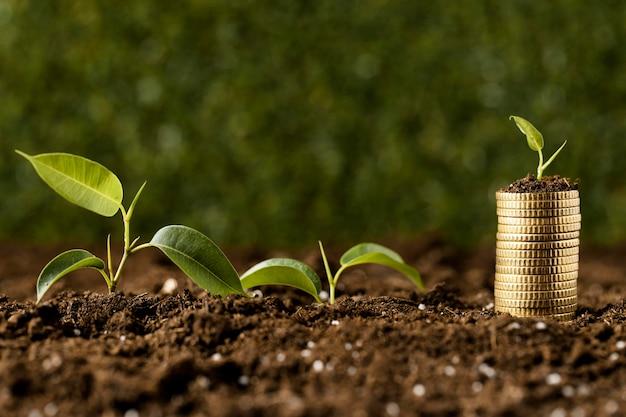 Вид спереди растений с монетами, сложенными на грязи