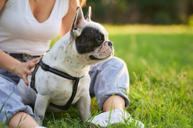 잔디에 앉아서 옆으로 찾고 순종 남성 프랑스 불독의 전면 모습. 가죽 끈을 사용하여 애완 동물을 안고있는 인식 할 수없는 여성 소유자가 도시 공원 근처에 앉아 있습니다. 애완 동물, 가축 개념.