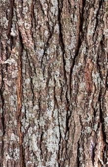 Вид спереди поверхности коры дерева