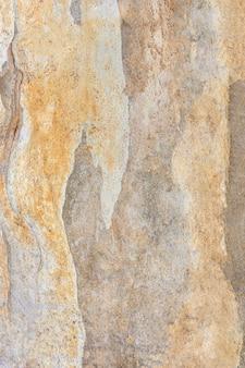 樹皮表面の正面図