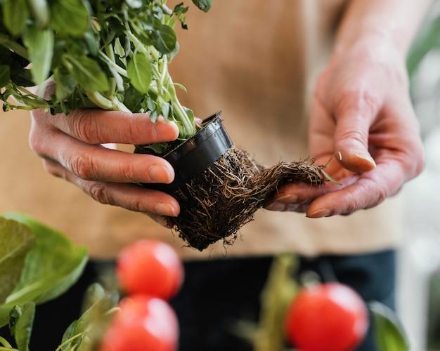 外部の根を持つ植木鉢を保持している女性の正面図