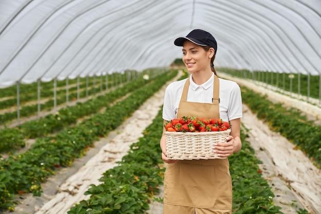ベージュのエプロンとモダンな温室でおいしいイチゴを収穫する黒い帽子の若い魅力的な女性の正面図。おいしいイチゴと籐のバスケットのコンセプト。