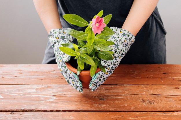 Front view person holding a flower pot