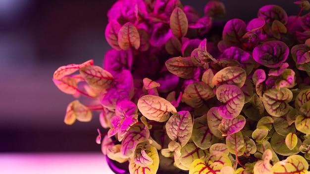Vista frontale della pianta nel laboratorio di biotecnologie