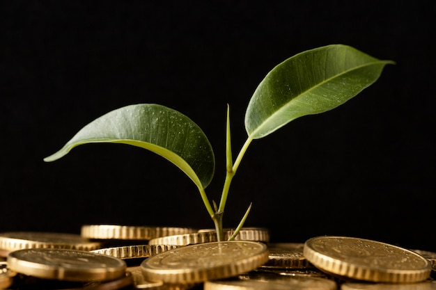 Front view of plant growing from coins