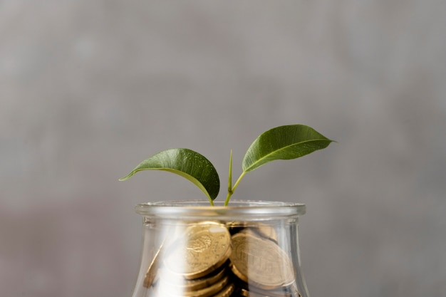 Front view of plant growing from jar of coins