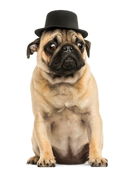 Front view of a pug puppy wearing a top hat sitting isolated on white