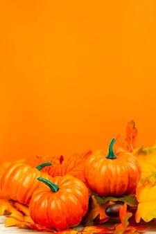 Front view pumpkins with orange background