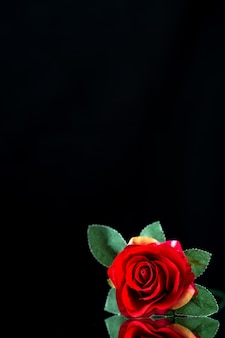 Front view of red rose on black