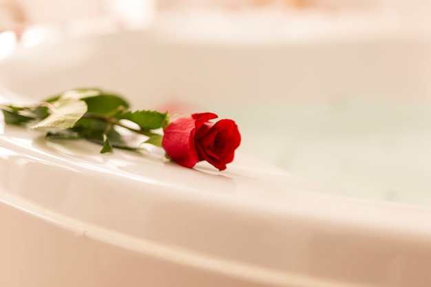 Front view rose on bathtub