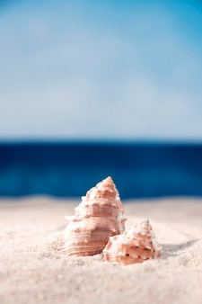 Front view of sea shells in beach sand with copy space