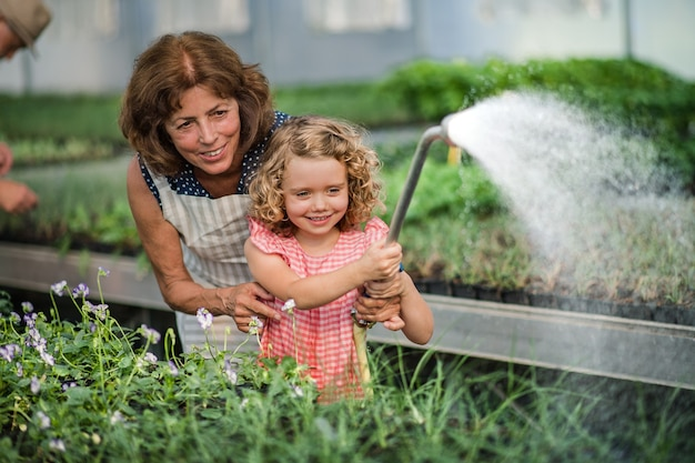 Front view of small girl with senior grandmother watering plants in the greenhouse.