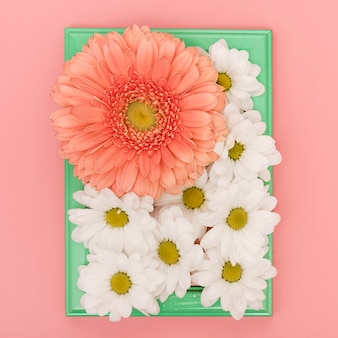 Front view tray with daisies and gerbera flowers