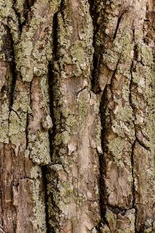 Vista frontale della superficie della corteccia di albero