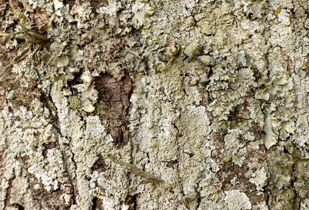 Front view of tree bark surface