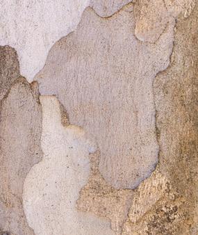 Vista frontale della struttura della corteccia di albero