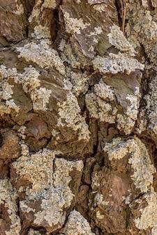 Vista frontale della corteccia di albero