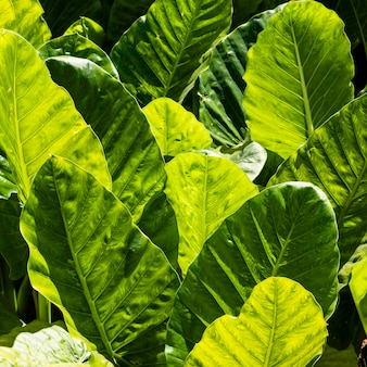 Front view of tropical leaves in the sun outdoors