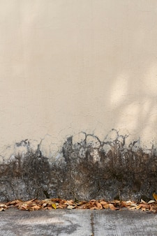 紅葉の正面壁