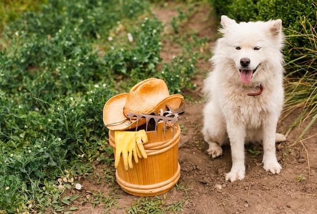 Вид спереди белая собака с садовыми принадлежностями