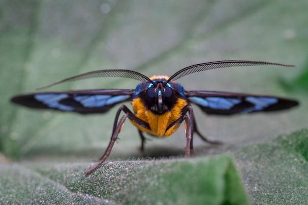 Фронтальный вид красочной бабочки, сидящей на листе