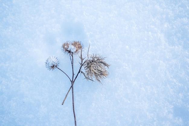 서리와 눈은 겨울에 야생 들판에서 엉겅퀴를 덮었습니다.