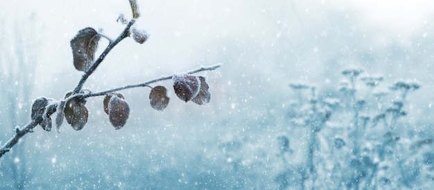 降雪時のウィンターガーデンの乾燥した葉を持つ霜で覆われたリンゴの木の枝