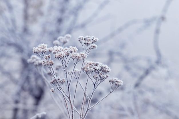 ぼやけた背景の冬の乾燥した植物の霜で覆われた枝