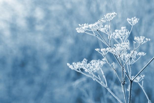 흐릿한 배경의 겨울 정원에 있는 말린 식물의 서리 덮인 가지, 복사 공간