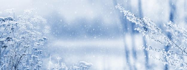 降雪時のぼやけた背景の牧草地の森の植物の霜で覆われた枝。クリスマスと新年の背景