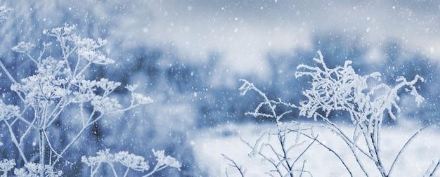 降雪時の芝生の森にある、霜に覆われた植物の枝。クリスマスと新年の背景