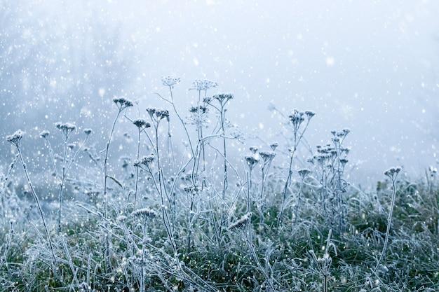 吹雪の中の霜に覆われた乾いた植物と緑の草。クリスマスと新年の背景
