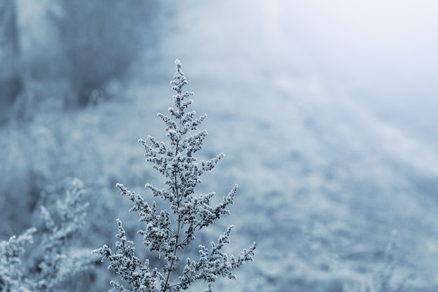 ぼやけた背景の凍るような冬の朝の霜に覆われた乾燥した植物
