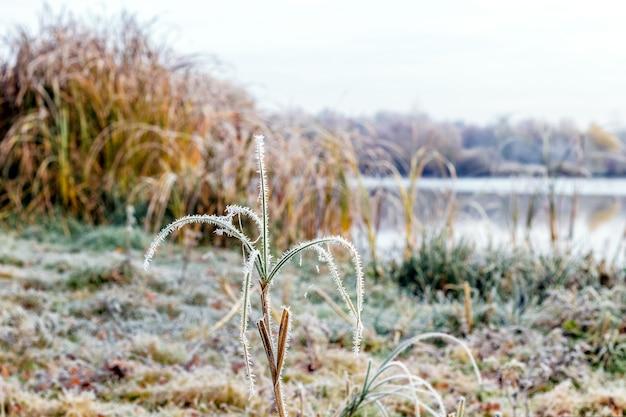 霜に覆われた草と川のそばの reed