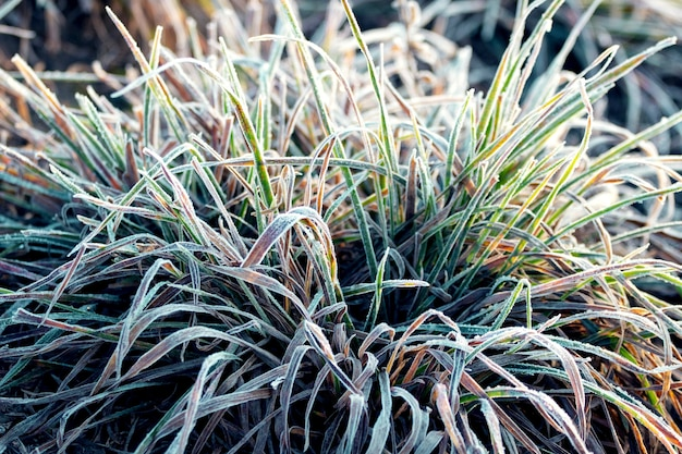 Frost covered grass. the first frost of autumn morning