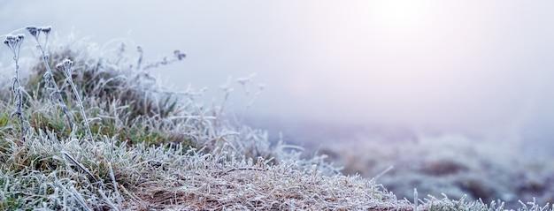 일출 동안 겨울 아침에 서리 덮인 잔디