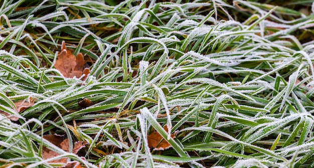 Мороз покрыл зеленую траву и сухие листья в траве, осенний и зимний фон