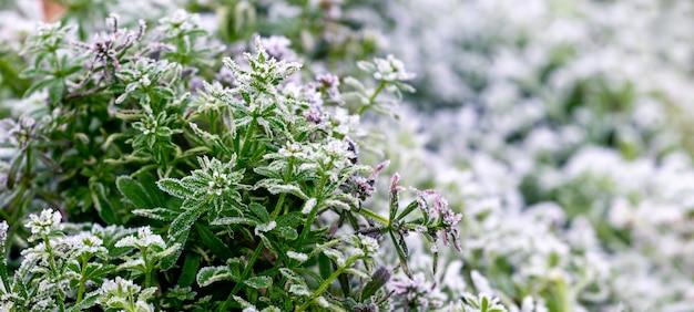 Покрытые инеем зеленые травянистые растения на размытом фоне, осенний и зимний фон