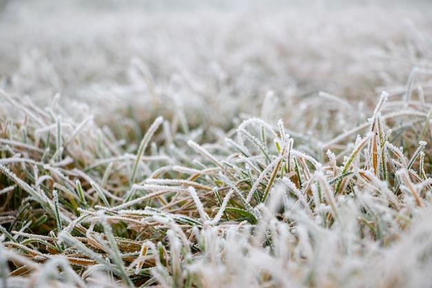 Густая зеленая трава, покрытая инеем, осенний и зимний фон