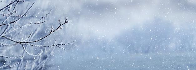 降雪時の霧の中の森を背景にした霜に覆われた木の枝、パノラマ。冬のクリスマスの背景