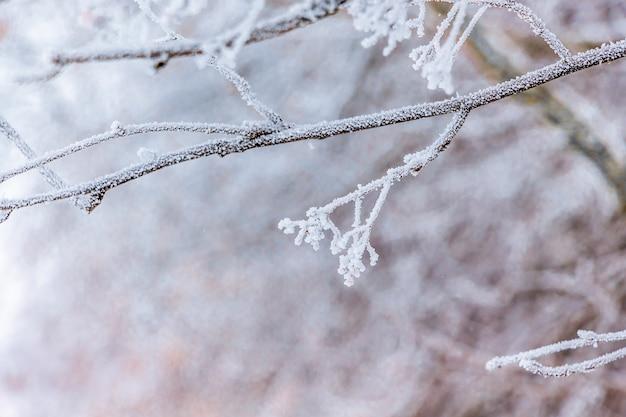 明るい背景の霜で覆われた木の枝_