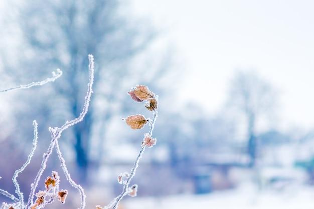 木の背景に乾燥した葉で霜で覆われた木の枝_