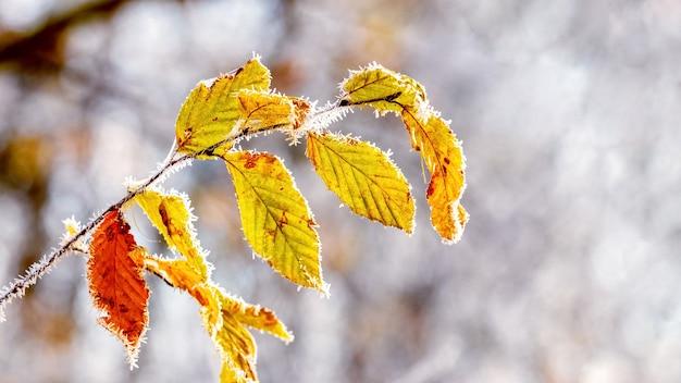明るい背景に葉が付いている霜に覆われた木の枝